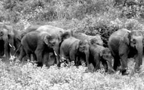 Elephants at New Hope Muniguda